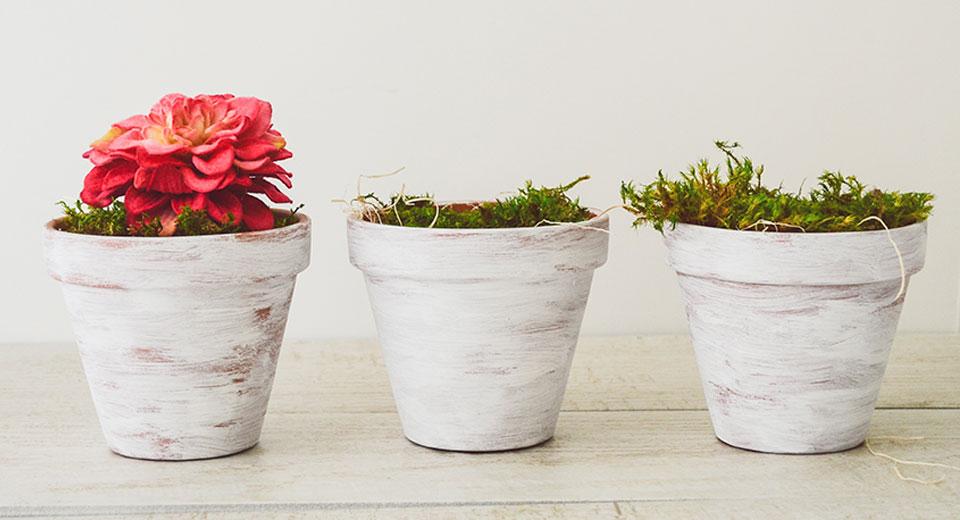 Растения чистят воздух – правда или миф?