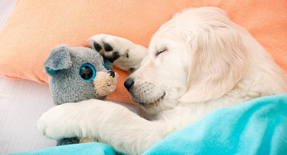 Правила здорового сна: лучшее время, правильная поза и другие секреты