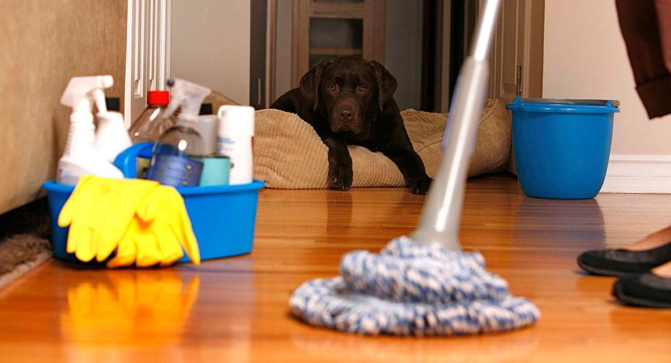 Как очистить воздух в квартире: причины загрязнений, решения, подводные камни