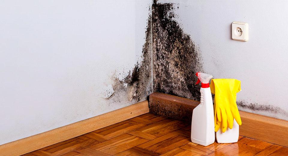 Черная плесень в доме: как бороться и предотвратить появление