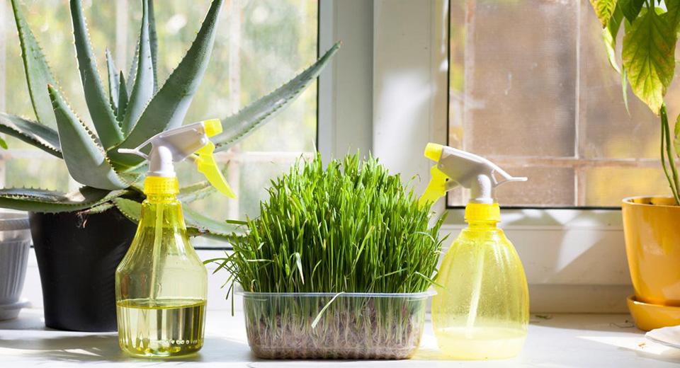 Растения, увлажняющие воздух в квартире