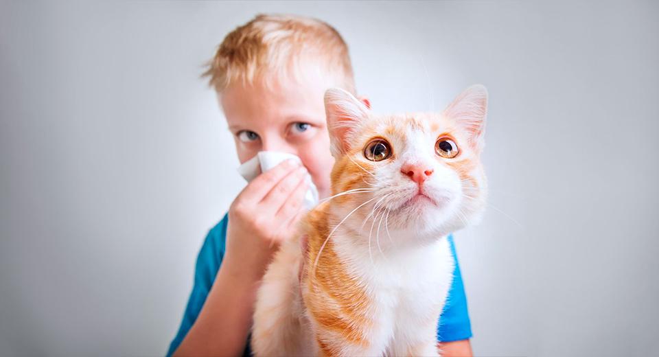 Каковы причины возникновения аллергии?