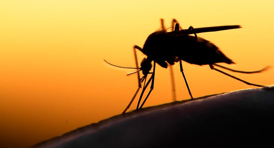 Как избавиться от комаров в квартире: от народных средств до передовых технологий