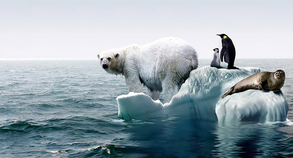 Глобальное потепление — это глобальная проблема
