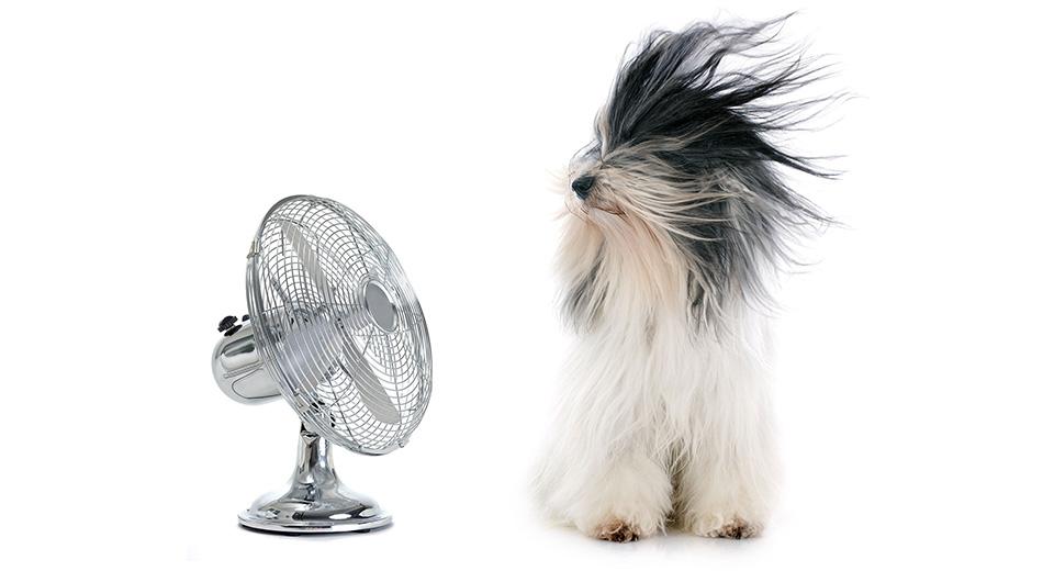 Вентиляторы для дома – лучшие бытовые решения, рейтинг популярных моделей