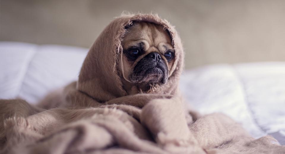 «Держаться нету больше сил»: постоянные усталость, слабость и их причины