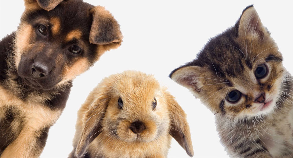 Гипоаллергенные животные для дома: правда или вымысел?
