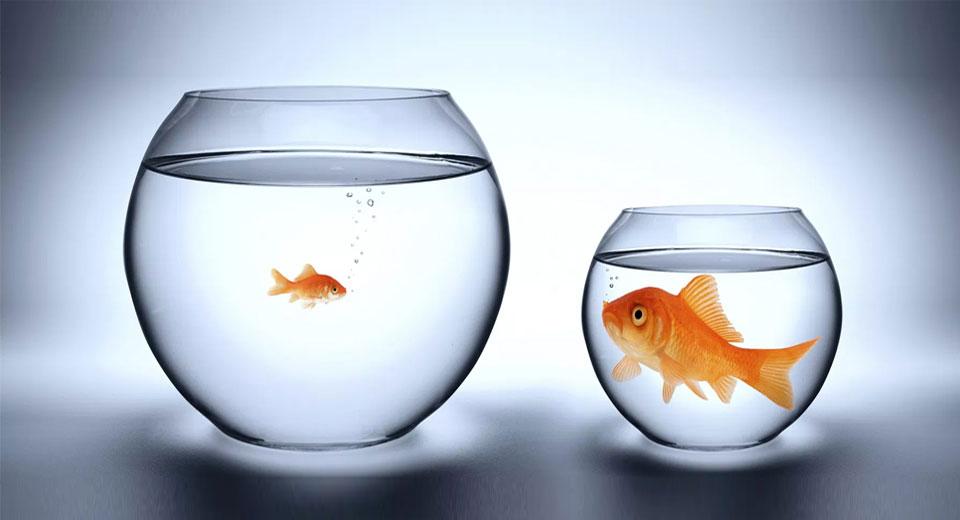 Рыбки в разных аквариумах