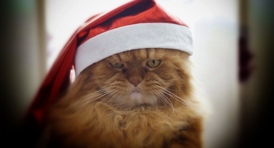 В ожидании чуда: что делать, если нет новогоднего настроения